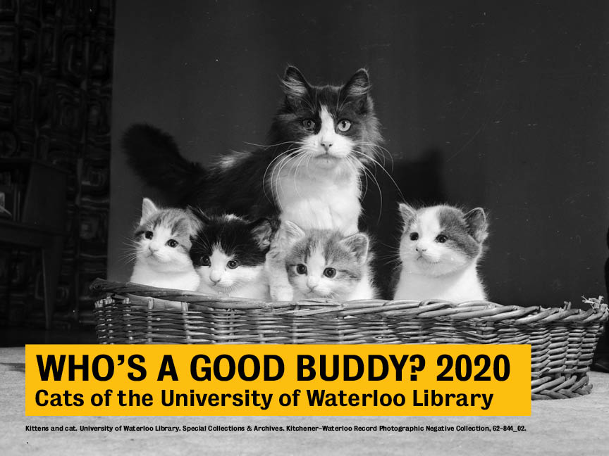 Cover of the Cats of Waterloo Library calendar, showing a tuxedo cat in a basket with four kittens.
