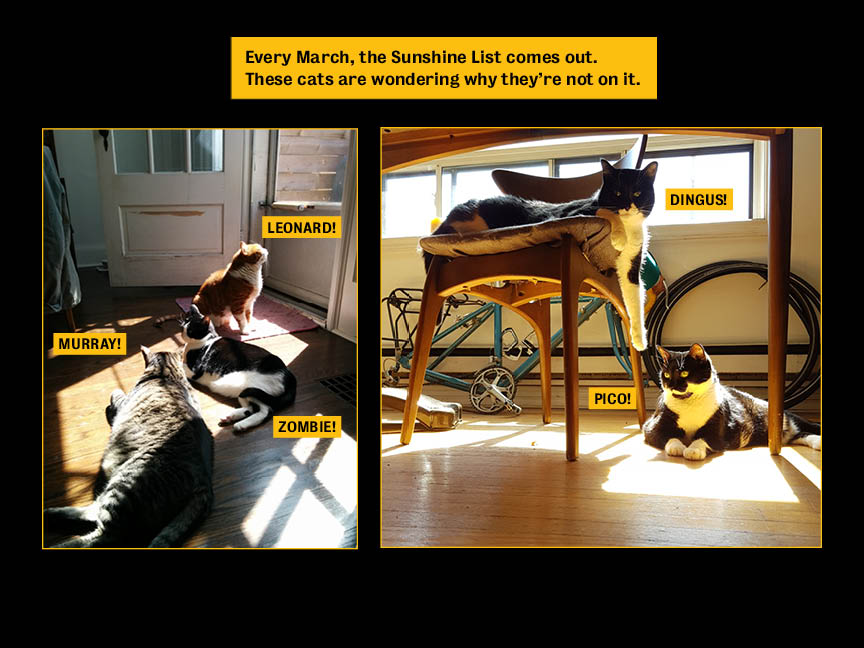 Calendar page showing two photos of groups of cats in sunbeams.