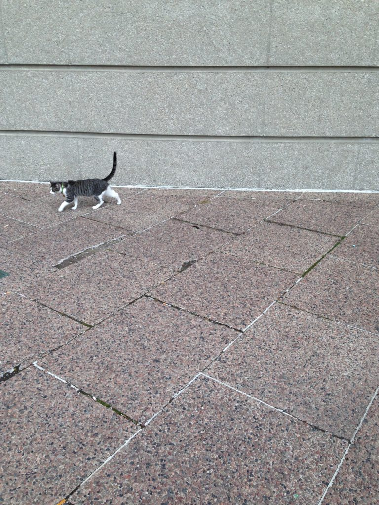 A small tabby cat with white legs walks across a stone patio in front of a concrete wall.