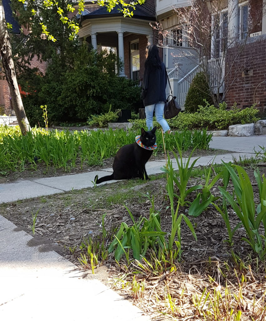 A small black cat sits in a garden in front of semi-detached houses. The cat wears a multicoloured fabric ruffle around their neck.